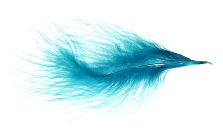 Beautiful decorative feather , isolated on white photo