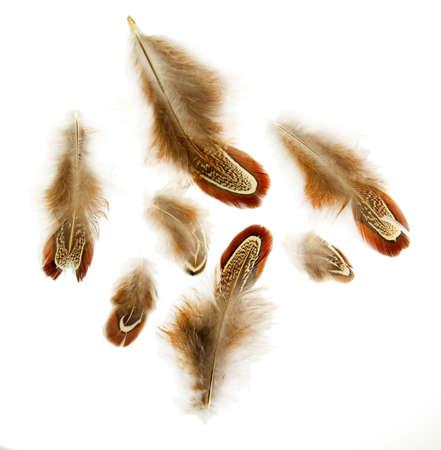 white feather: Beautiful decorative feathers, isolated on white Stock Photo