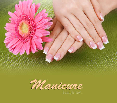 Woman hands with french manicure and flower on green background Stock Photo - 19770319