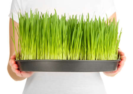 Hands holding growing grass isolated on white photo