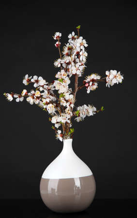 Beautiful blooming branches in vase isolated on black photo
