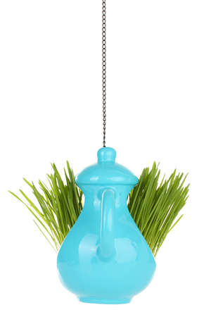 Green grass in decorative pot isolated on white photo