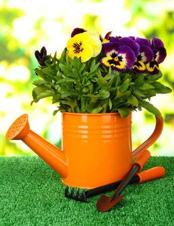 Beautiful pansies flowers on grass on bright background photo