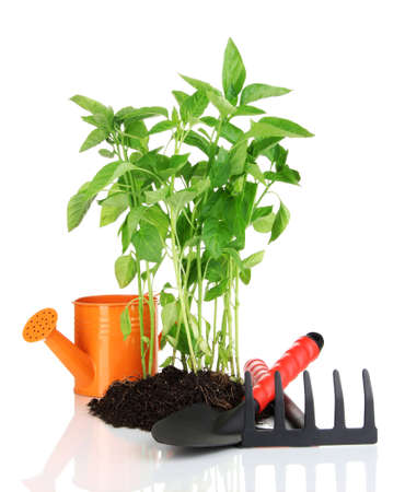 Pepper seedlings with garden tools isolated on white Stock Photo