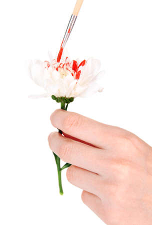 Female hands holding white flower and paint it with colors, isolated on white photo