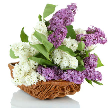 Beautiful lilac flowers in  wicker basket, isolated on white photo