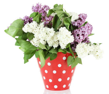 Beautiful lilac flowers in vase, isolated on white photo