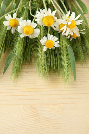 spikelets: Green spikelets and wild camomiles, on wooden background
