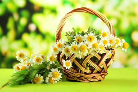 Wild camomiles and spikelets in basket, on green background photo
