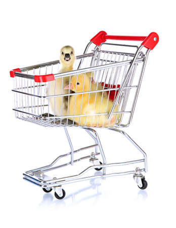 Little ducklings in trolley isolated on white Stock Photo