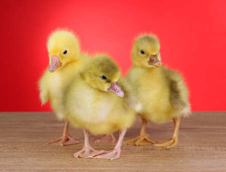 Little ducklings on table on red background photo
