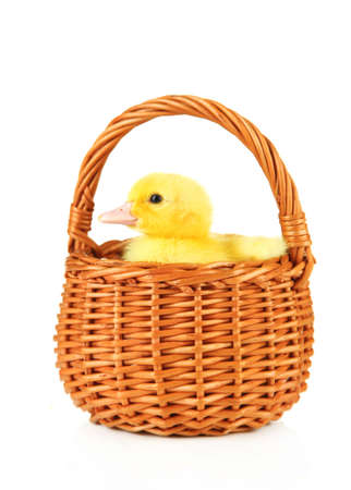 Cute duckling in wicker basket, isolated on white photo