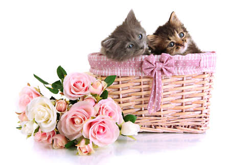 Small kittens in basket isolated on white photo