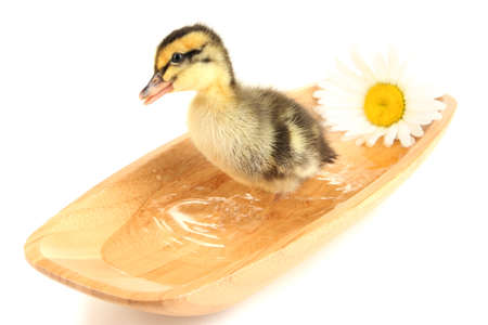 Floating cute duckling isolated on white photo