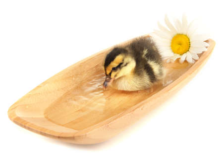 Floating cute duckling isolated on white Stock Photo