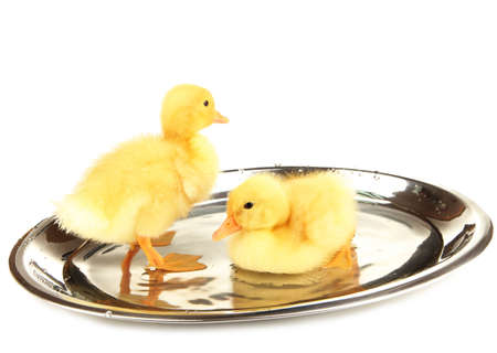 Floating cute ducklings isolated on white photo