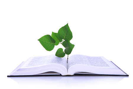 white book: Book with plant isolated on white