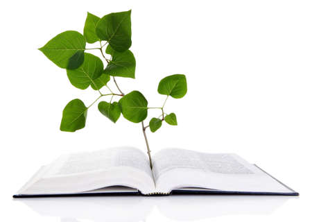 Book with plant isolated on white photo