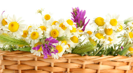 Beautiful wild flowers in basket, isolated on white photo