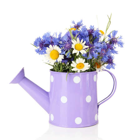 Bouquet of cornflowers and chamomiles in watering can, isolated on white photo