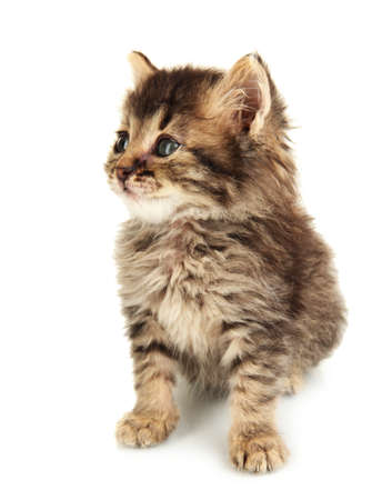 Small kitten isolated on white photo