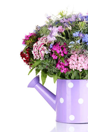 Beautiful bouquet in watering can isolated on white photo