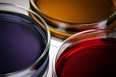 chemically: color liquid in petri dishes on grey background Stock Photo