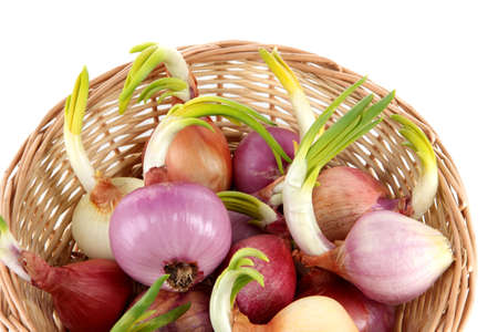 close up of onions in a basket: Sprouting onions in basket close-up Stock Photo