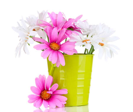 amorousness: Beautiful daisies in colorful bucket isolated on white