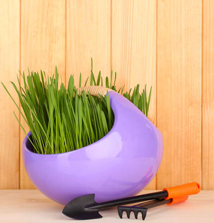 Green grass in decorative pot on wooden background photo