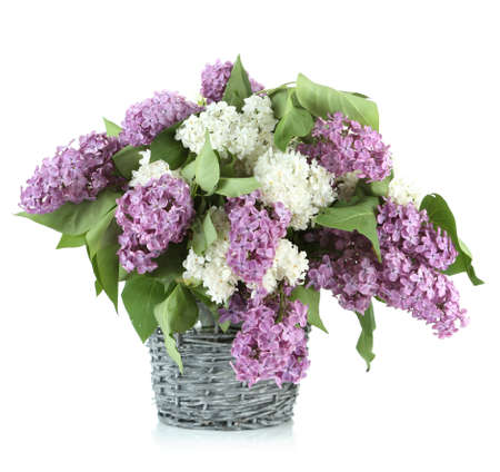 Beautiful lilac flowers in  wicker vase, isolated on white photo