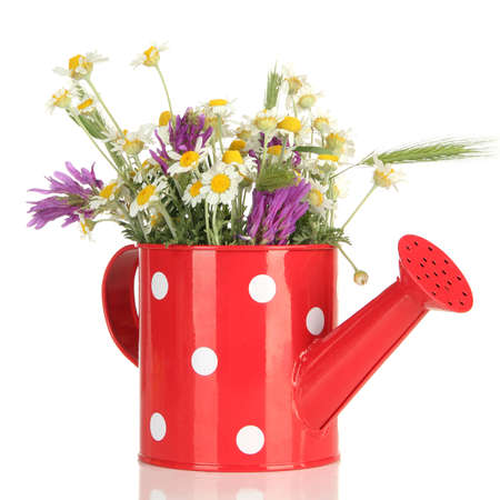 Beautiful wild flowers in watering can, isolated on white photo