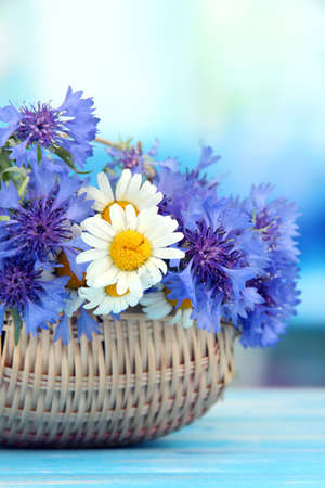 corn flower: Beautiful bouquet of cornflowers and chamomiles in basket on blue background