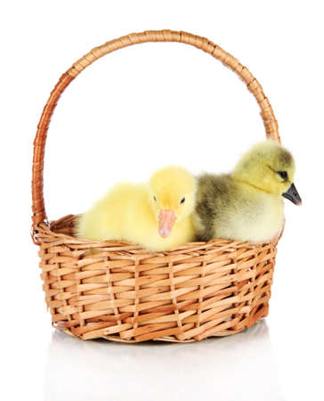 Little ducklings in wicker basket isolated on white photo