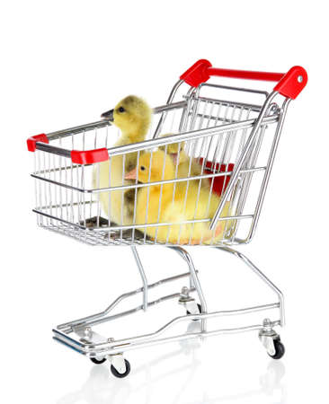 webbed: Little ducklings in trolley isolated on white Stock Photo