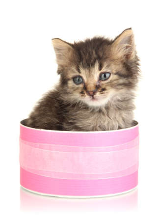 Small kitten in pink gift box isolated on white Stock Photo - 20800198