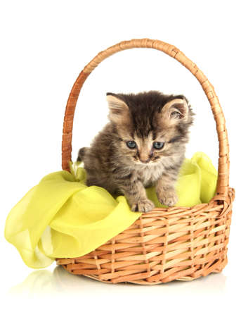Small kitten in basket isolated on white Stock Photo - 20800202
