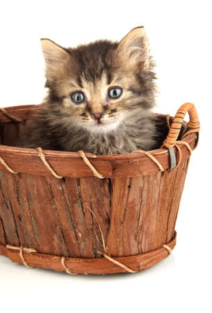 Small kitten in basket isolated on white Stock Photo - 20800425