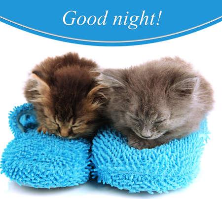 buonanotte: Piccoli gattini siede sulla casa pantofole isolato su bianco