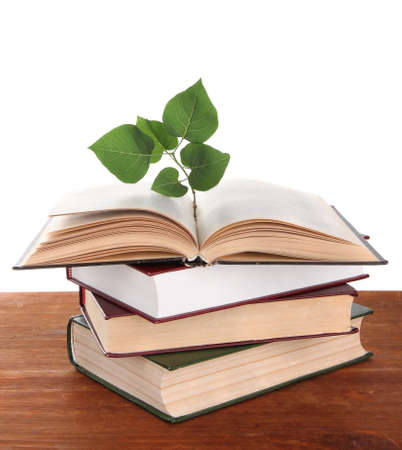 Books with plant on table on white background photo