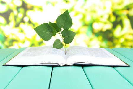 Book with plant on table on bright background photo