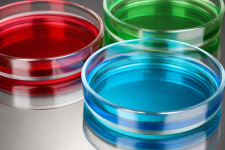 color liquid in petri dishes on grey background photo