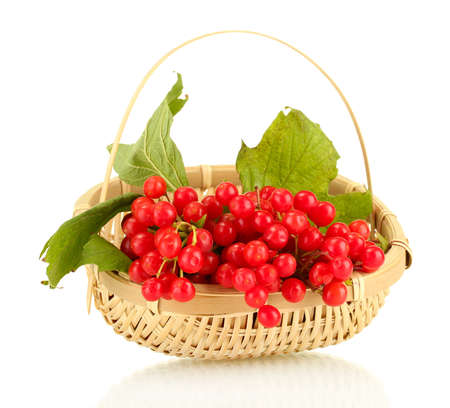 guelder rose: Ripe viburnum in a wicker basket isolated on white Stock Photo