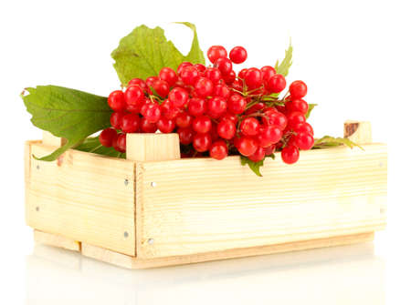 Ripe viburnum in a wooden box isolated on white photo