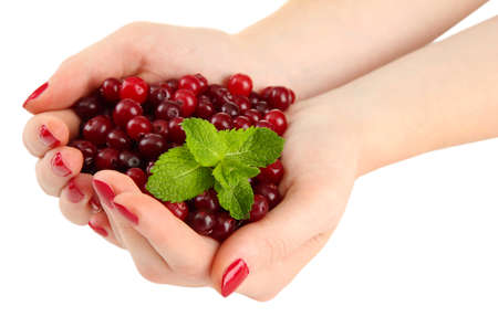 Woman hands holding ripe red cranberries, isolated on white  photo