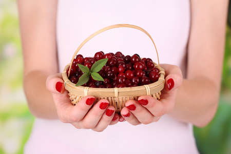 Woman hands holding basket of ripe red cranberries, close up  photo