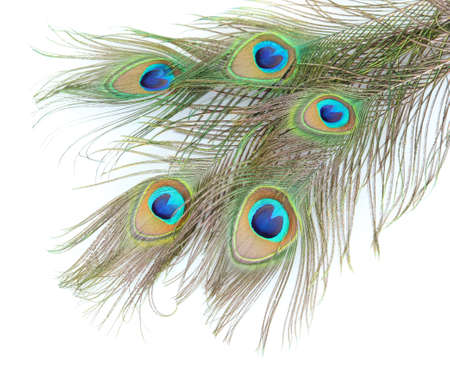 Peacock feathers on white background close-up photo