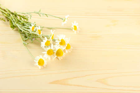 Wild camomiles, on wooden background photo
