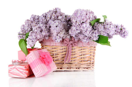 Beautiful lilac flowers isolated on white photo