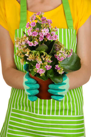 Beautiful flower in pot in hands of girl gardener isolated on white Stock Photo - 21322835